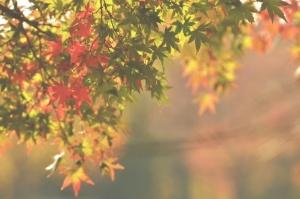 うつろいゆく葉と心logoなし